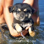 Cute Fluffy Puppy Dog Photograph Print