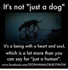 It's not ust a dog. It's a being with a heart and soul, which is a lot more than you can say for 'just a human'.