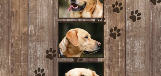 Custom Dog Memorial Keepsake Blankets | Pet Sympathy Gifts