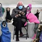 Bernie Sanders Greyhounds Meme