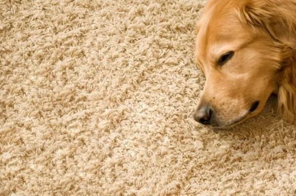 carpet repair columbia sc. Black Bedroom Furniture Sets. Home Design Ideas