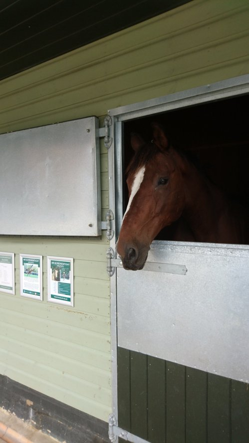 The Horse Trust Speen | Buckinghamshire | Home of rest for Horse | Free Time with the Kids