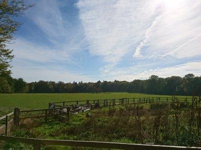 Ashridge Meadow | Hertfordshire | Free Time with the Kids