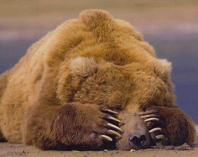 Irradiando Luz à Cova do Urso
