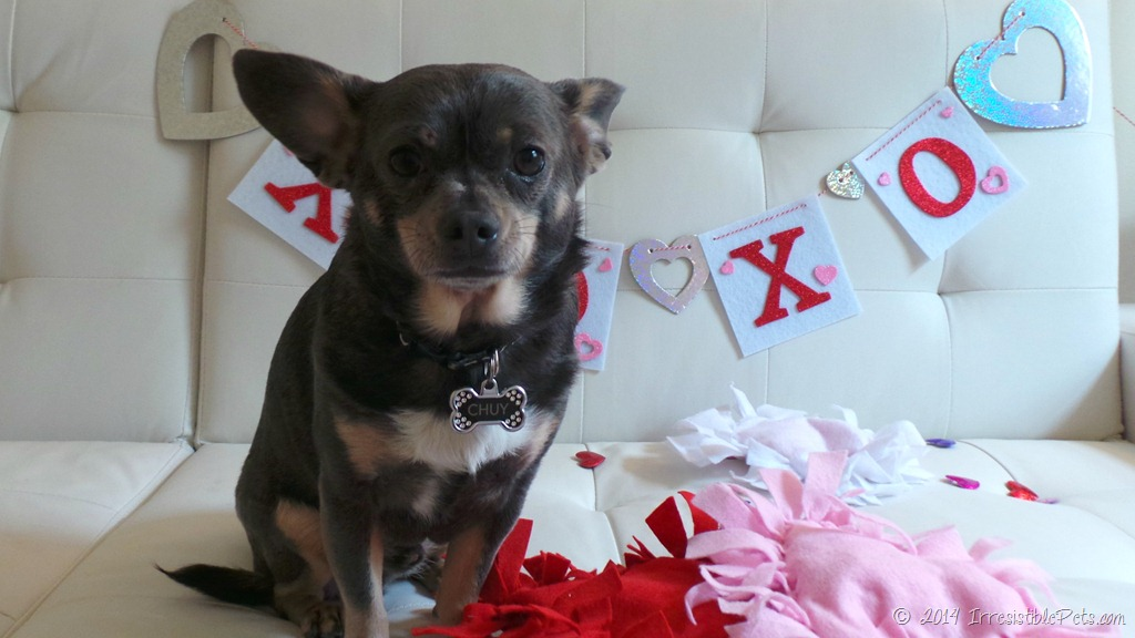 DIY No Sew Heart Pet Toy For Valentines Day