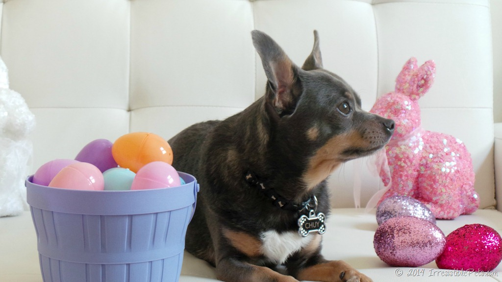 DIY Easter Basket For Dogs Irresistible Pets
