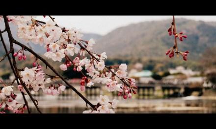 2012年春、京都へ。(&転職のご報告)
