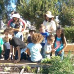 Nurture Nature Garden