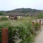Help Nurture Bommer Canyon Nature Garden