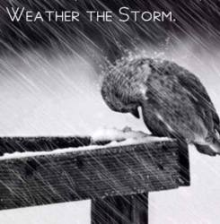 Weather the Storm bird in the rain with head down