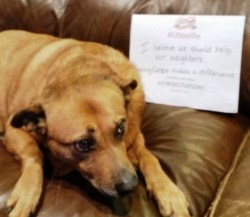 Sister the dog with her #UNselfie picture in support of #GivingTuesday