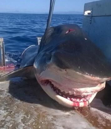 Tiburon-Australia-
