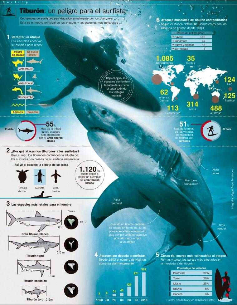 tiburoninfografia.jpg
