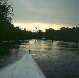 amazonas-bootsfahrt-in hochwasserzeit ohne tiere