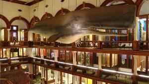 hawaii-großzügiges Heimatmuseum 007