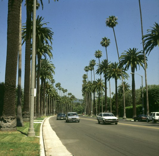 los-angeles-palmenallee-2