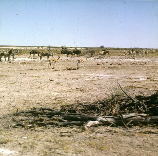 namibia-etoschapfanne 1987
