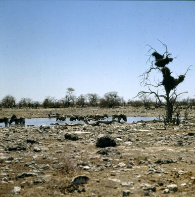 namibia-etoscha-wasserstelle 1987