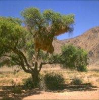 namibia-im Gemsbock-N.P. 1987