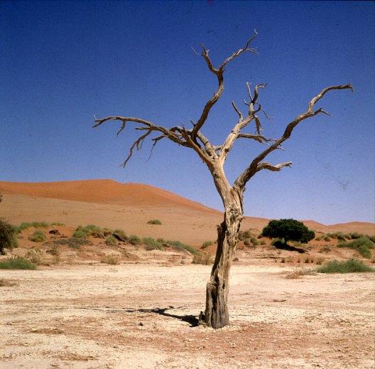 namibia-sossusvlei-baum 1987