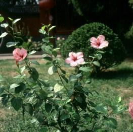 Peking-seltene Blumen 2000