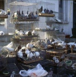 Peking-Vogelmarkt 2000