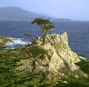 san-francisco-monterey lonepine