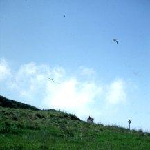 neuseeland-stewart-island-albatrosse 2001