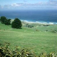 neuseeland Schafweide Dunedin 2001
