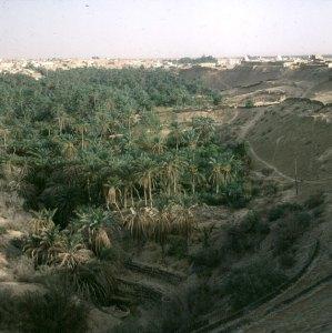 Tunesien-Djerba-Oasensenke 1990