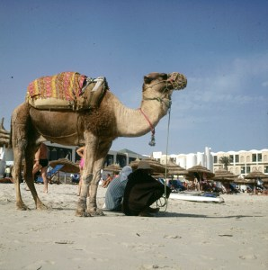 Tunesien-Djerba 1990
