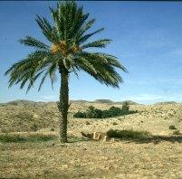 Tunesien Wüste bei Matmata 1980