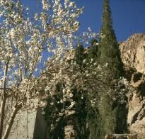 aegypten-sinai-klostergarten 1981