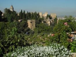 alhambra-blumen-blick