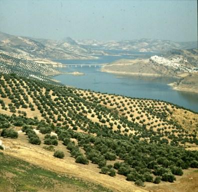 andalusien-olivenberg