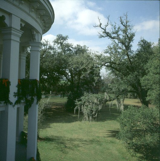Mississippi-Roedowngarten