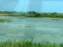 rhone-Camargue-flamingos