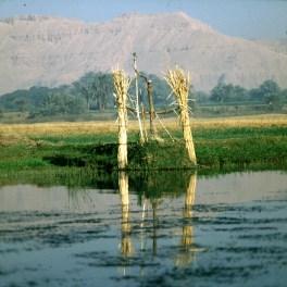Nil-Schaduf