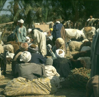 Luxor Gerda mit Lämmchen 1980