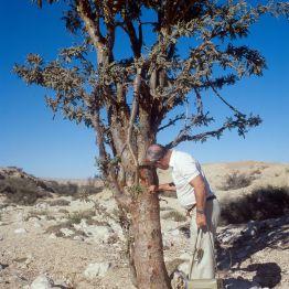 Oman Salalah Weihbaum Irvin 1989