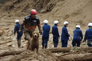 広島土砂災害PWJ災害救助犬