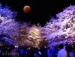 4月4日の皆既月食は夜桜とのコラボも でも全国の天気は?