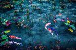 海外の写真サイトで絶賛!不思議なトーンの「日本の梅雨」