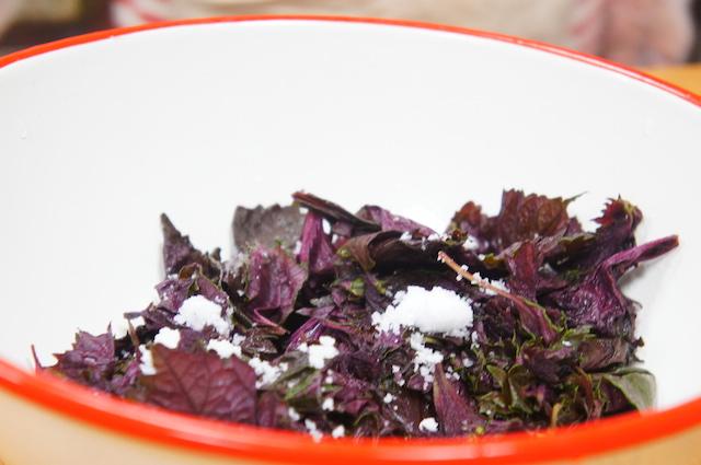 梅干し作り|赤紫蘇の処理|画像9