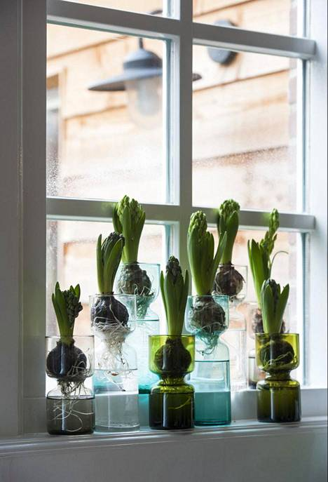 Hyacinth is also suitable for spring.