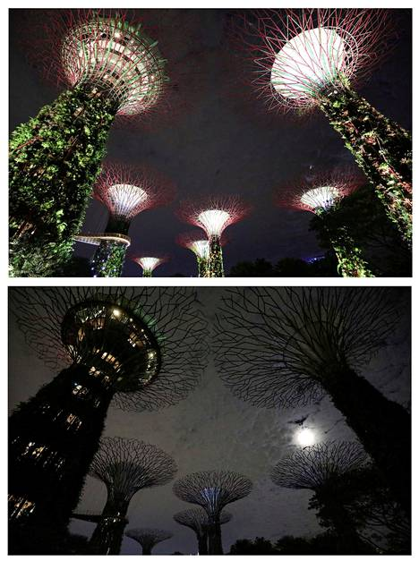 """""""Super Trees"""" at the Natural Park in Singapore."""