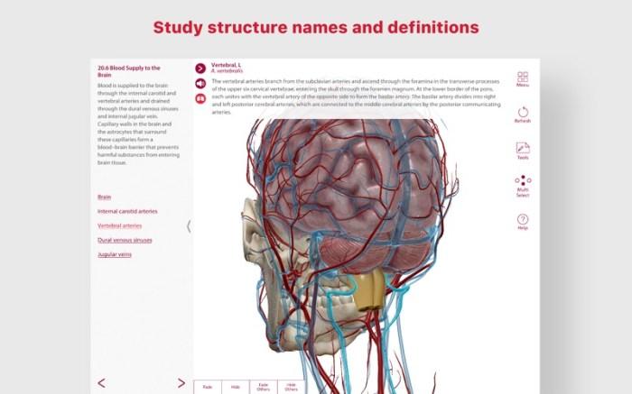 Anatomy & Physiology Screenshot 4