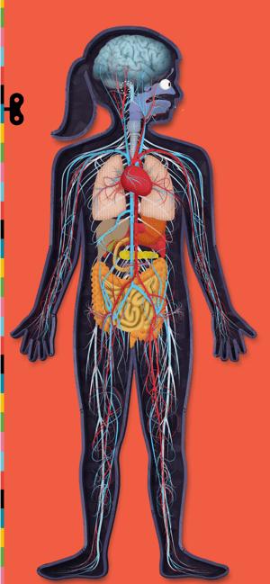 The Human Body by Tinybop Screenshot
