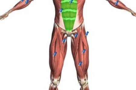 Human Body Painting Human Anatomy Human Ken Doll Human Anatomy Human
