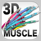 3D Muscle